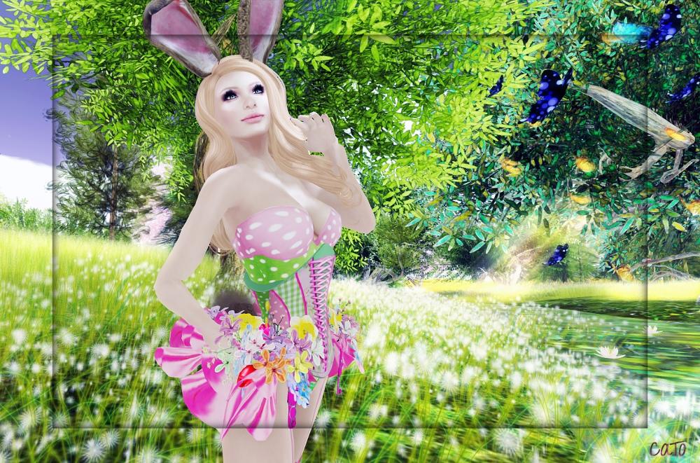 Bunny_001