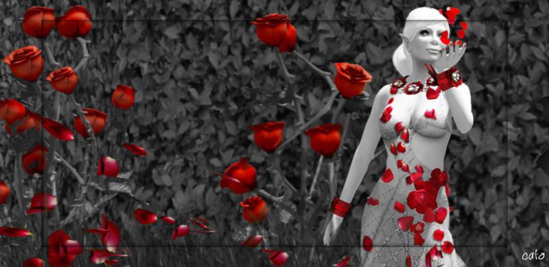 rose_001_1024px