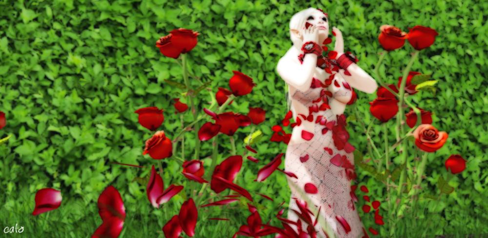 rose_002_1024px