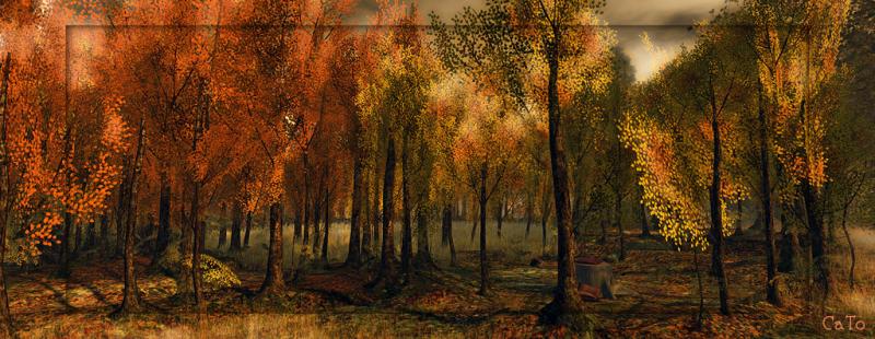 Trace_autumn_001