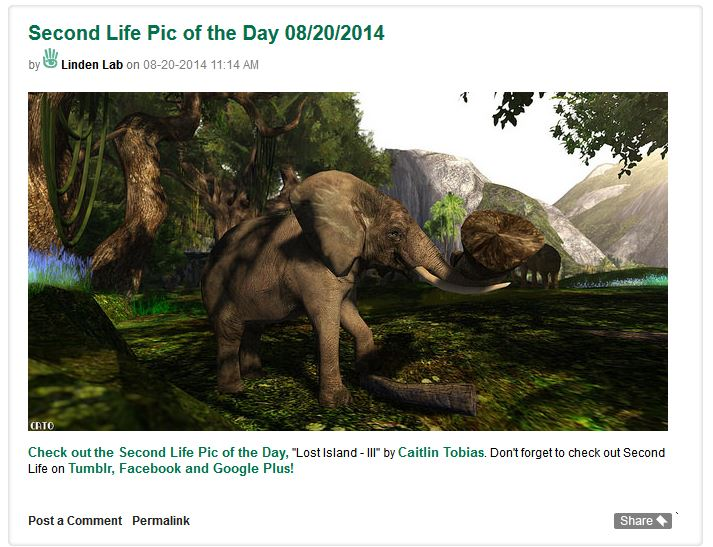 Pic of the day elephant 20aug2014